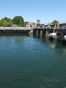 Ballard Lock and Salmon