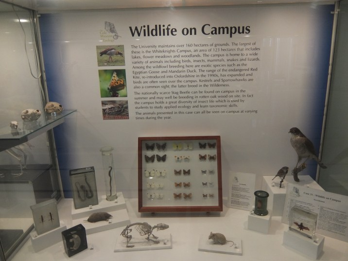 Cole Museum of Zoology Wildlife on Campus