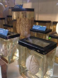 Grant Museum preserved brains