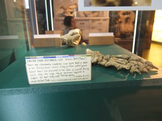 Grant Museum UCL student specimen
