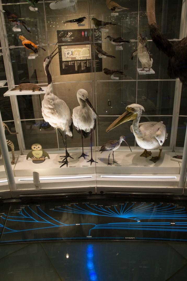 Biodiversity Gallery Floor Lights