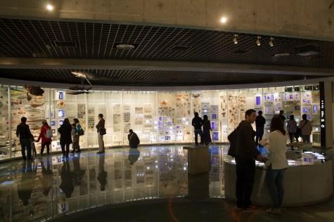 Biodiversity Gallery Wall
