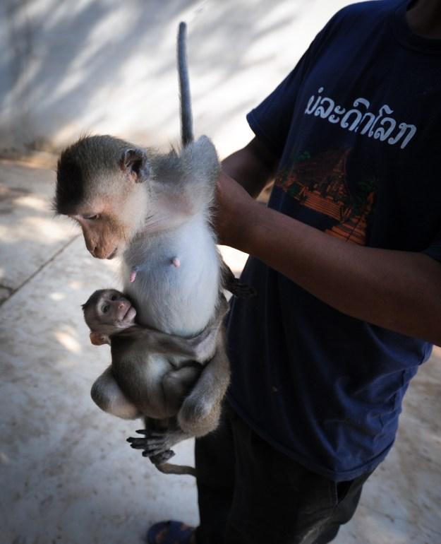 Macaque farm, Photo by Jo-Anne McArthur