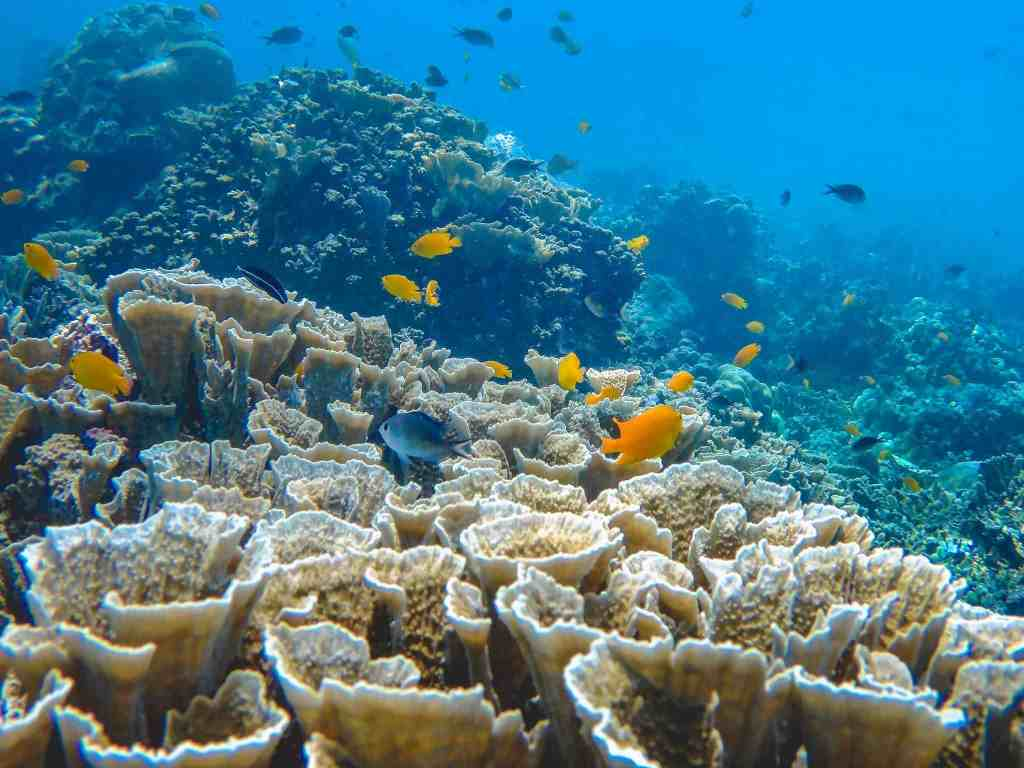 Snorkeling In Amed The Best There Is In Bali Museum Of Wander