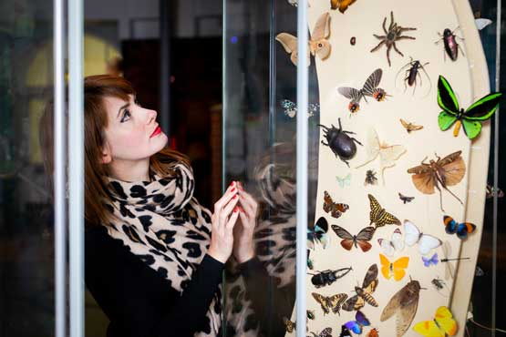 Person looking at insects on display