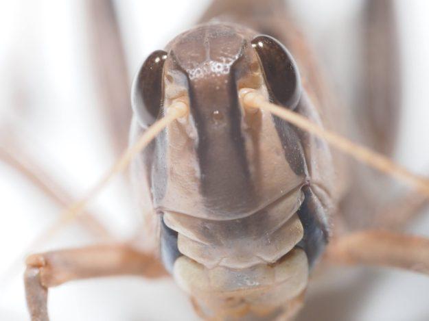 食用昆虫は新型コロナでの感染リスクを高める食品ではないだろう、との意見記事