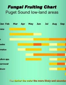 Daniel   fungal feastability function also pacific northwest mushroaming winkler webpages rh
