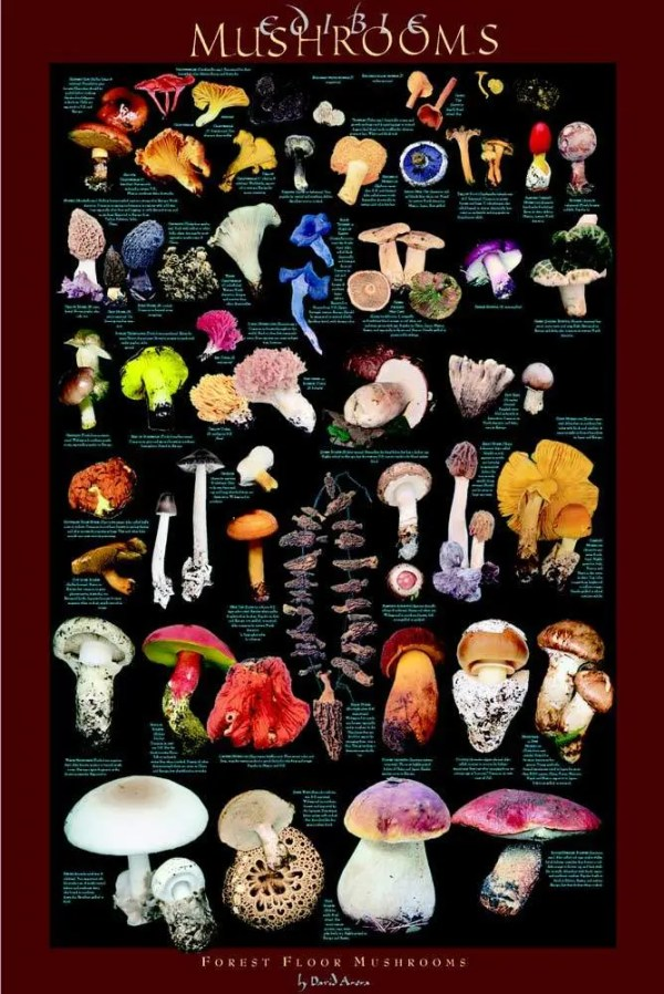 Forest Floor Mushroom Poster