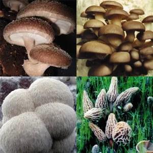 Gourmet Mushroom Kits & ProductsGrow Morel Mushrooms, Shiitake