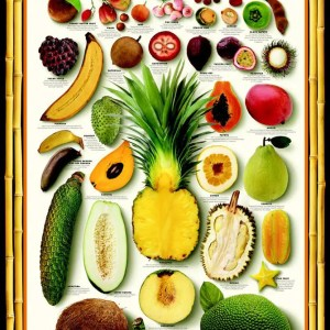 Exotic Tropical Fruit Poster