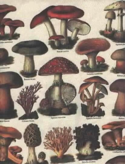 Vintage Mushroom T Shirt