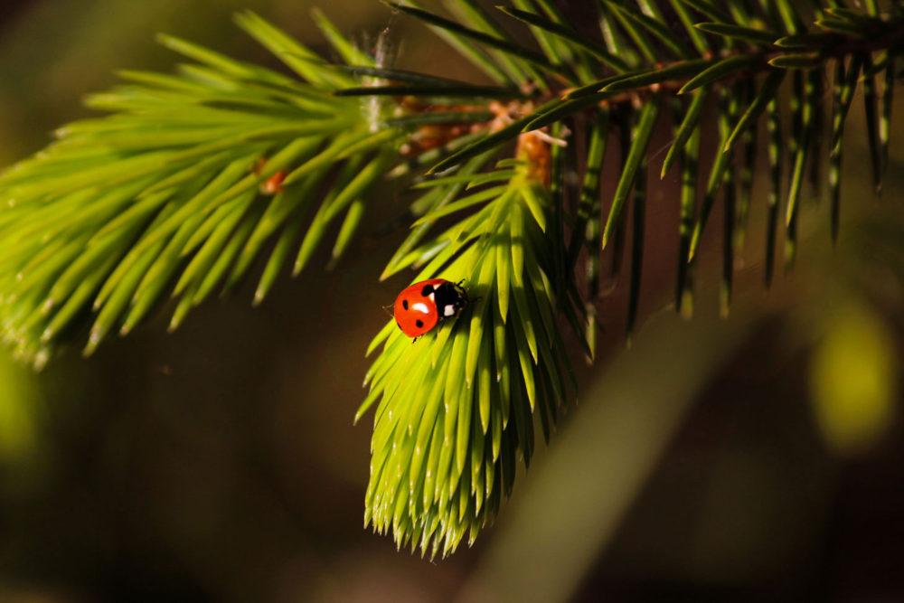 mindfulness ladybug