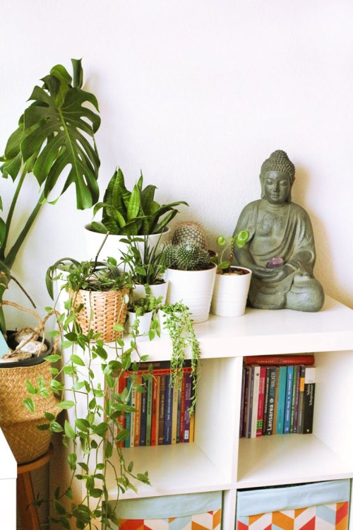 plants for a cosy home