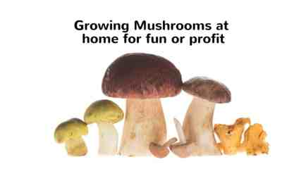 Growing Mushrooms at home for fun or profit.