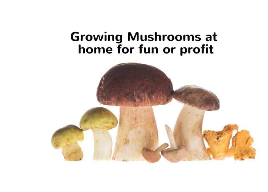 Growing Mushrooms for Profit