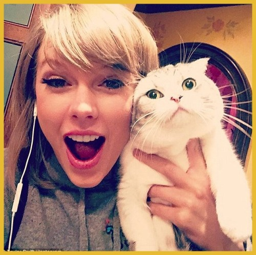 Taylor Swift e gato instagram