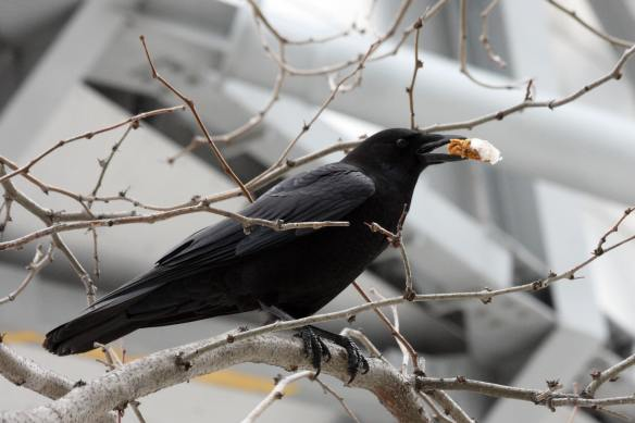 Crow's Cookies IMG_1685_1