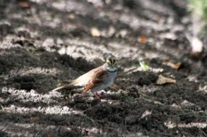 WT Sparrow IMG_7318_1