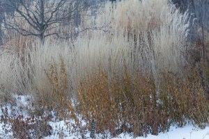 Lurie Garden in Winter