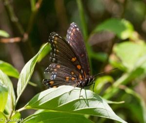 Butterfly 6-22-14-1942