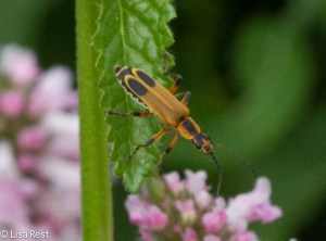 Bug on Flowers 6-19-14-1810