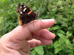 Red Admiral on Hand