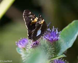 Butterfly Portage 8-2-15-1368
