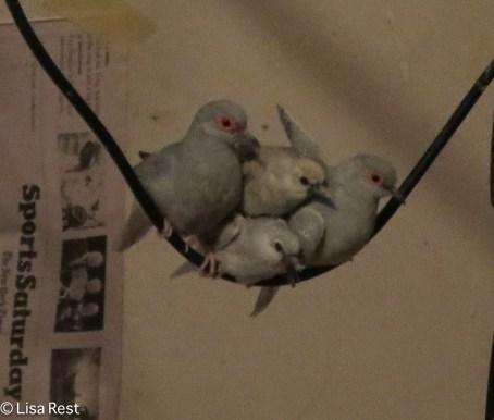 dove-family-11-26-16-0708