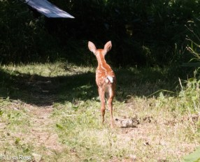 Bambi 6-25-17-0737