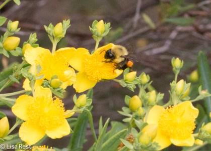 BEE 6-24-17-0426