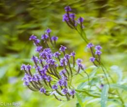 Wildflower Portage 07-29-17-6509