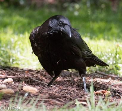 Crow LSE 06-27-2017-0782