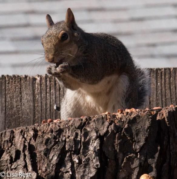 Squirrel 10-29-17-6984