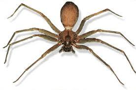 Brown recluse spider bites christmas decoration storage