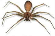 brown recluse spider christmas decoration storage