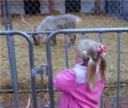 christmas at cheekwood reindeer family fun nashville