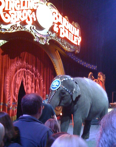 ringling brothers circus nashville tn family fun nashville parents