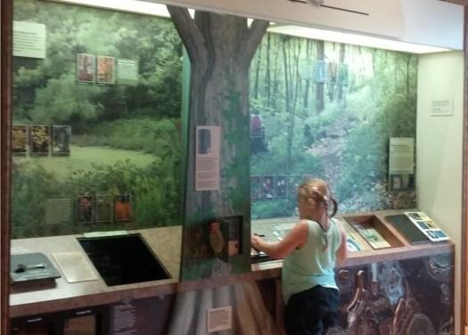 Warner Park Nature Center Renovated