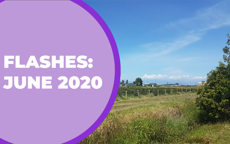Flashes: June 2020
