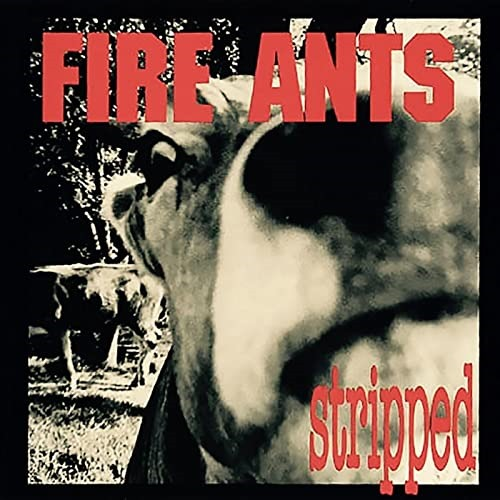 MHBOX ROCK LEGENDS: Recorded by Nirvana, Mudhoney, Soundgarden producer and feat Nirvana's original drummer, Seattle grunge gods 'The Fire Ants' get 'Stripped' to the bone.