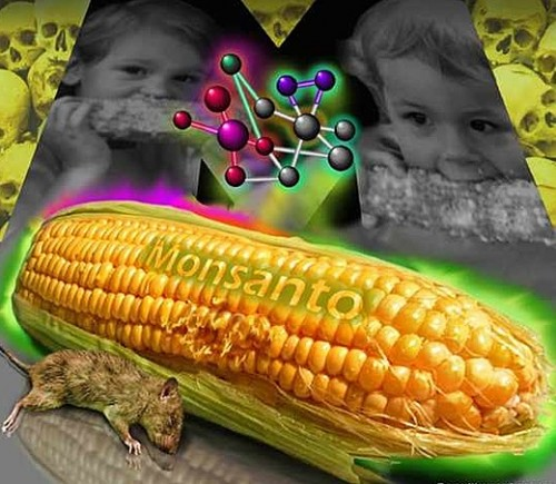 Monsanto is closing its operation in Britain because of opposition to GMO foods