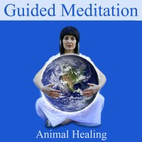 animal-healing-childrens-meditation