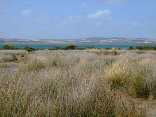 venus-bay-wetlands