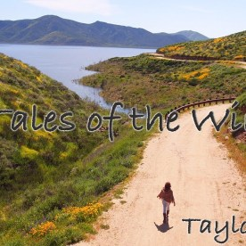 Tales of the Wind - Taylor Davis (Original Song)