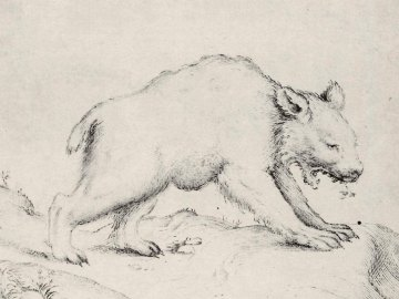 Agostino Carracci: Bär und eine Biene. Ausführung: Francesco Brizio. Um 1595, Kupferstich, 12,5 × 15,2 cm. London, The British Museum, Department of Prints and Drawings.