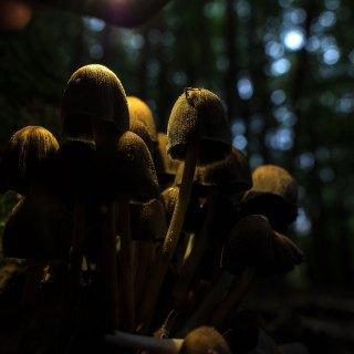 Pilzkultur im Wald. Foto: Hufner
