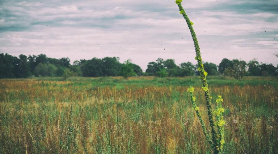 Freies Feld. Foto: Hufner