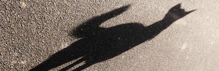 Ein Schatten der Erkenntnis. Foto: Hufner