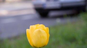 Blumen und Verkehr. Foto: Hufner