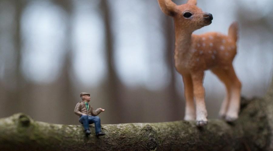 Bambi im Wald. Foto: Hufner